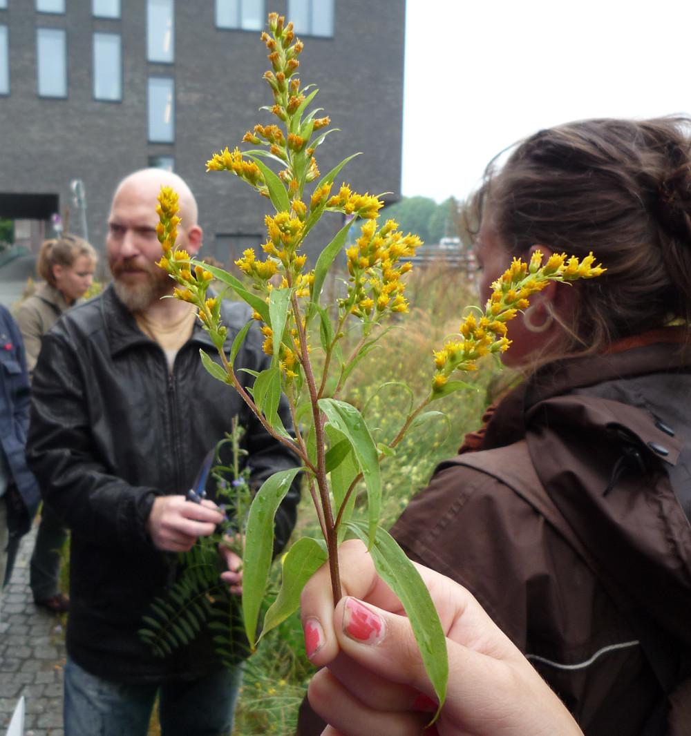 Heilkräuter und Wildpflanzenseminar in Bremen