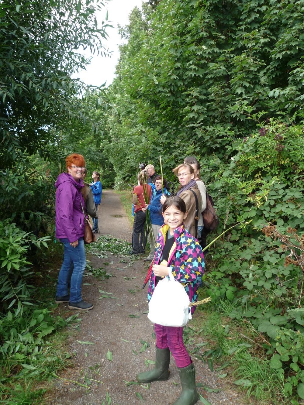 Wildkräuter und Heilpflanzen sammeln